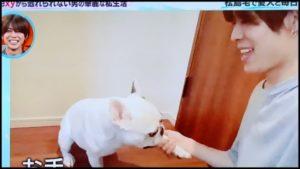 松島聡は犬のビスが好き